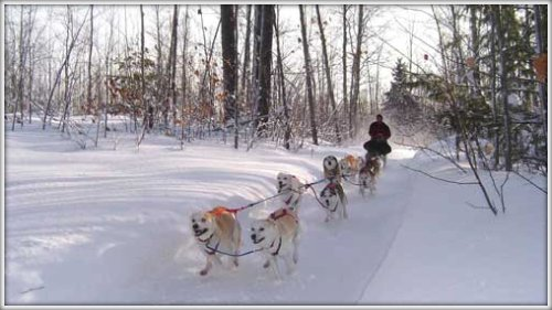 UP200 Dog Sled Race is in Michigan's beautiful Upper Peninsula