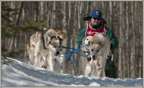 Read Picture Books For Kids Featuring Dog Sled Races In