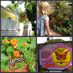 Original Butterfly House Mackinac Island Is A Fun and Relaxing Mackinac Island Attraction