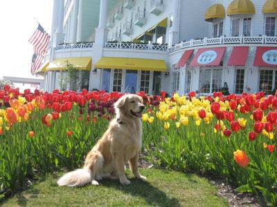 King of the Tulips