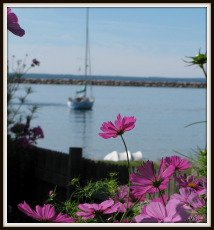Mackinac Island Flowers