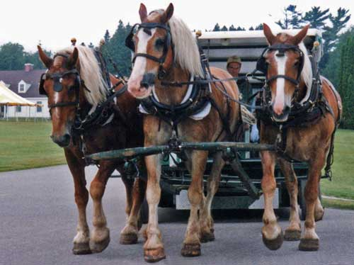 Carriage Tours Mackinac Island: group tour or private, it is a wonderful way to enjoy an overview of this vacation destination.
