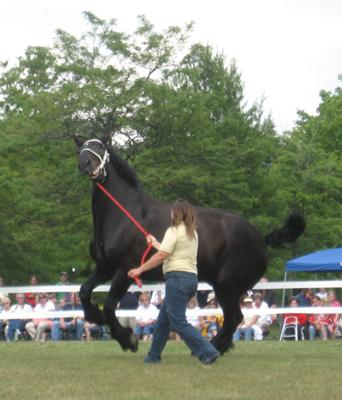 Festival of the Horse Breed Show